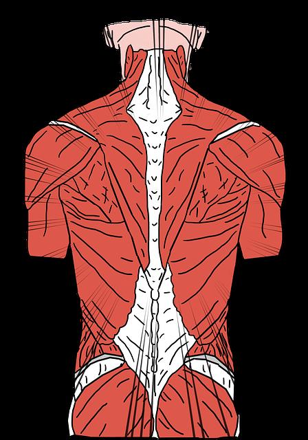 comprendre la douleur du dos