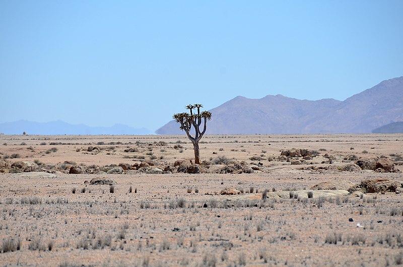 5 lieux incontournables à voir lors d'un road trip en Namibie